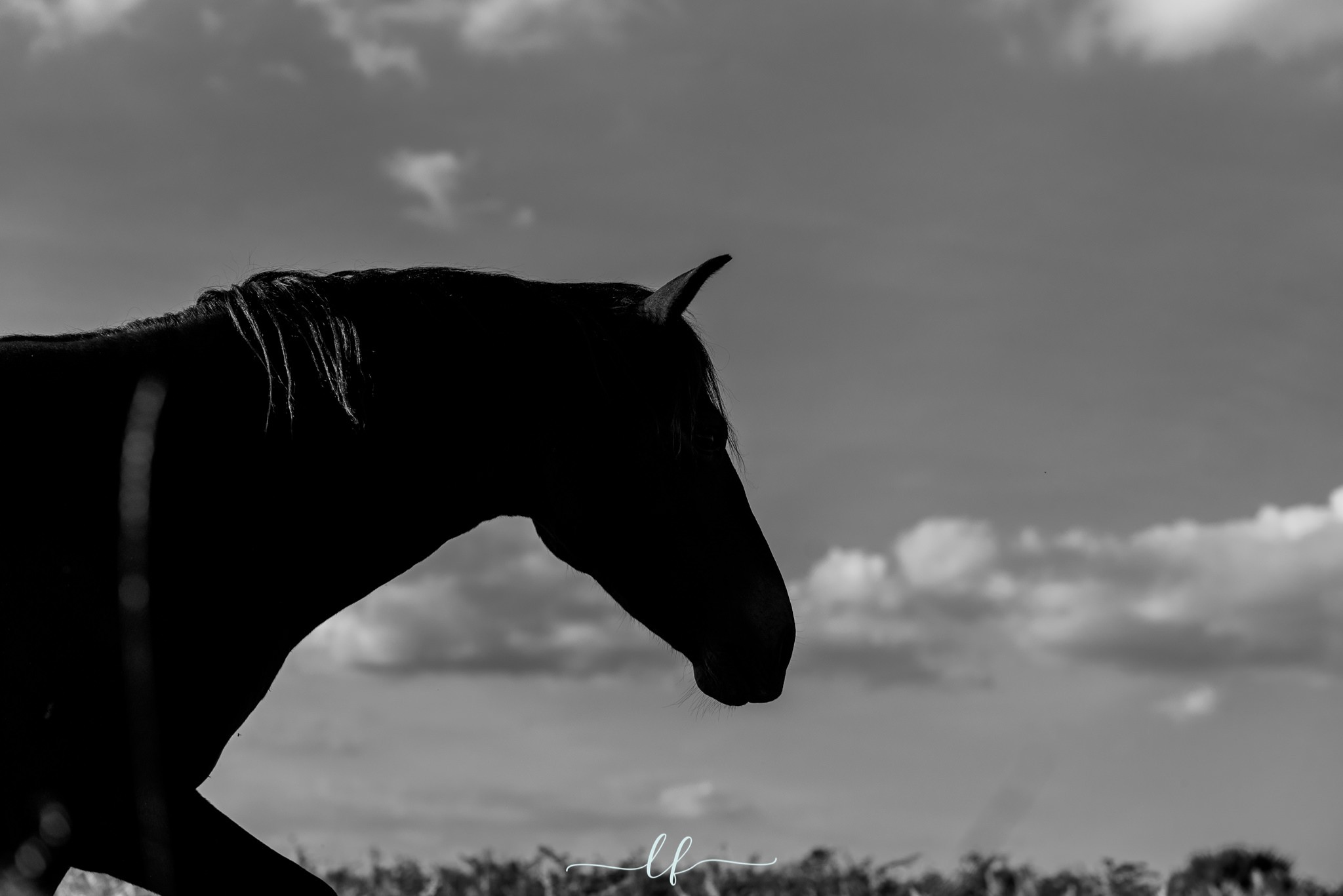 Silhouette of horse against clouds and grey sky