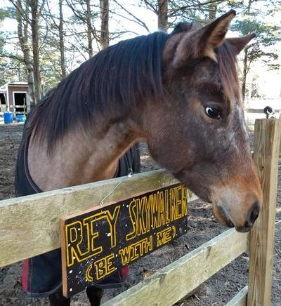 Horse looking over fence at sign